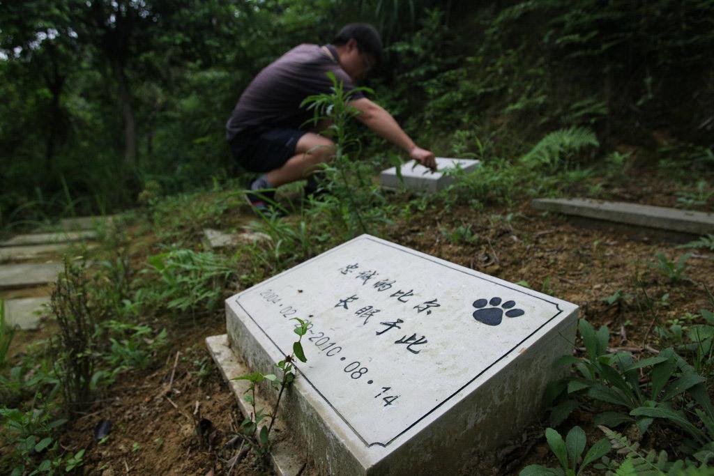 重庆市小动物协会会长陈明才表示