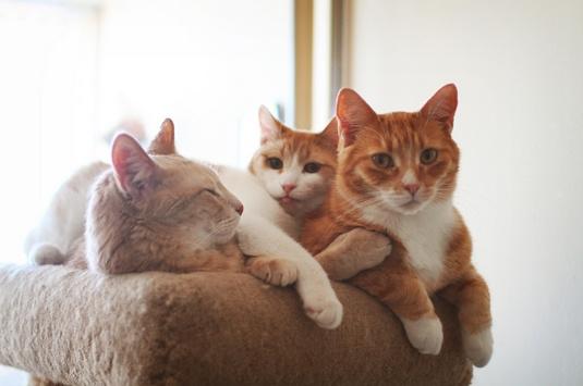 三只流浪猫与主人的温馨下午茶时光