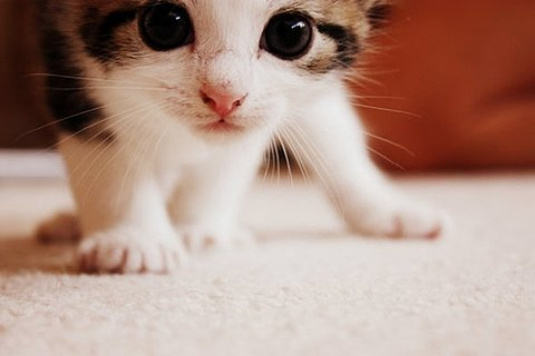 小猫高兴图片大全可爱