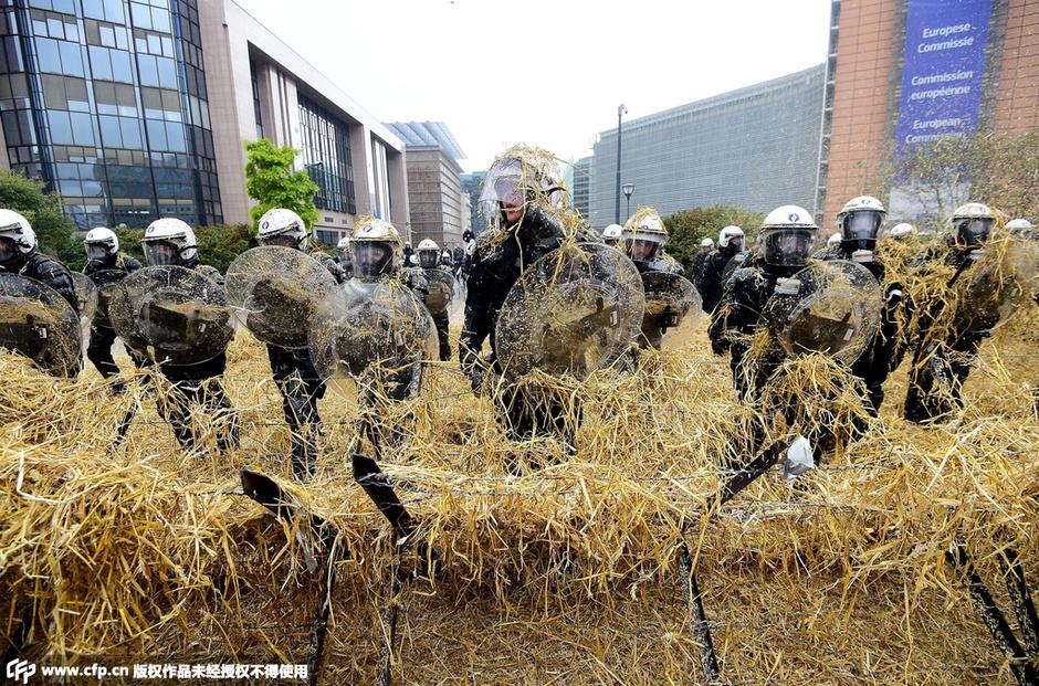 欧洲农民用鸡蛋砸警察 抗议农产品价格过低图片