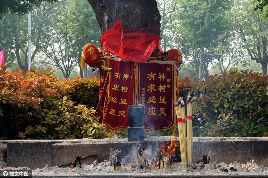 """枝繁叶茂,不少市民和游客在""""神树""""下焚香跪拜,祈福平安,已经成为一道"""