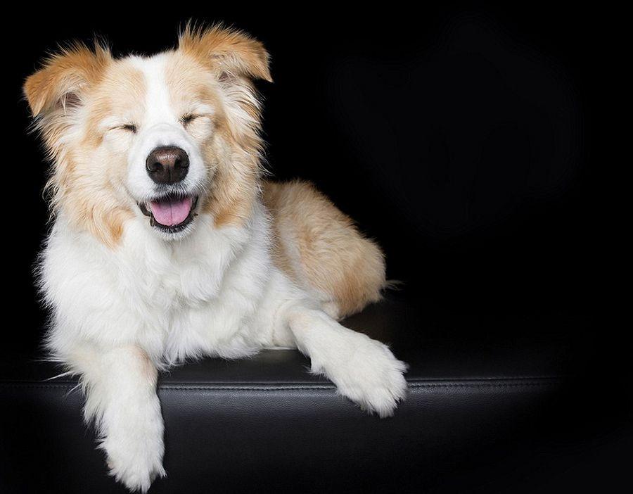 """闭眼萌照,并将这些照片命名为""""安静的狗狗"""",呼吁人们应像这些小动物一"""