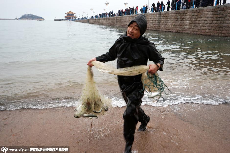 青岛栈桥出现大量梭鱼
