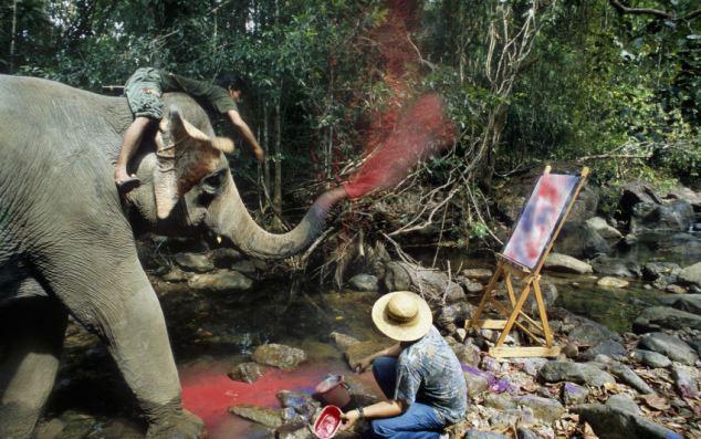 大象用鼻子绘画 动物们的惊人天赋
