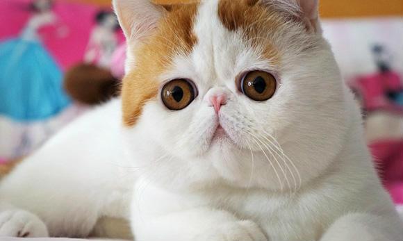 丰腴身材呆萌大眼睛