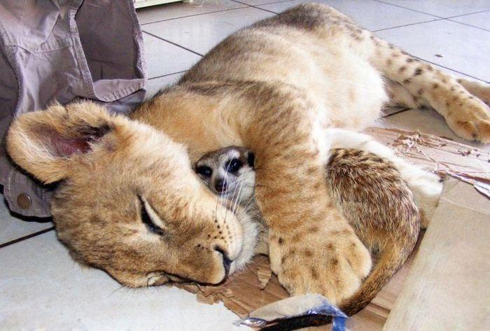 而且很多动物睡觉的样子都十分