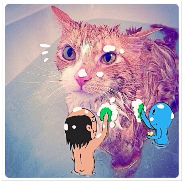 韩国猥琐大叔恶搞宠物照片 太欢乐了图片