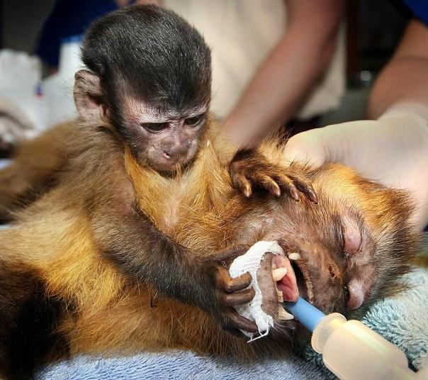 求放过!手术台上的动物们表情萌哭了