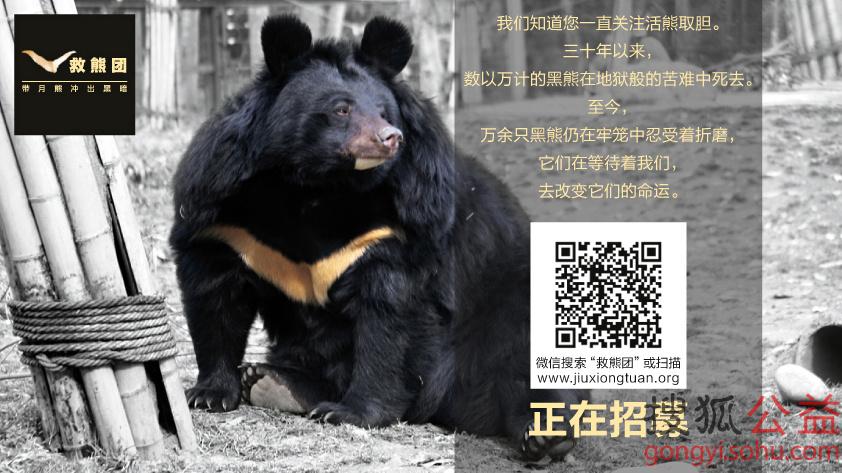 亚洲动物基金15周年 爱之守护