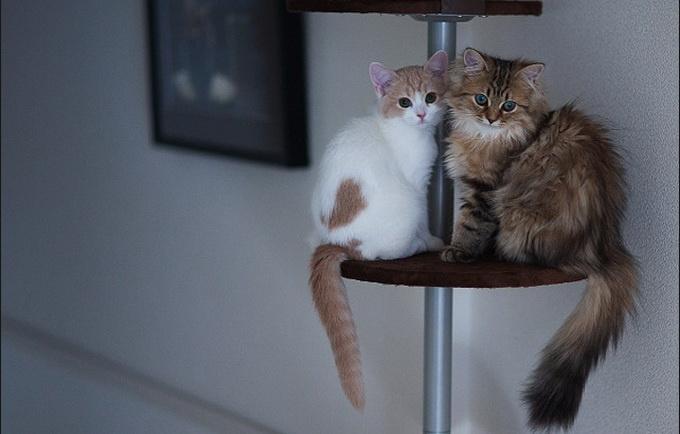 者用独特的视角为自己的小猫咪黛西(daisy)拍摄了一组非常可爱的照片.