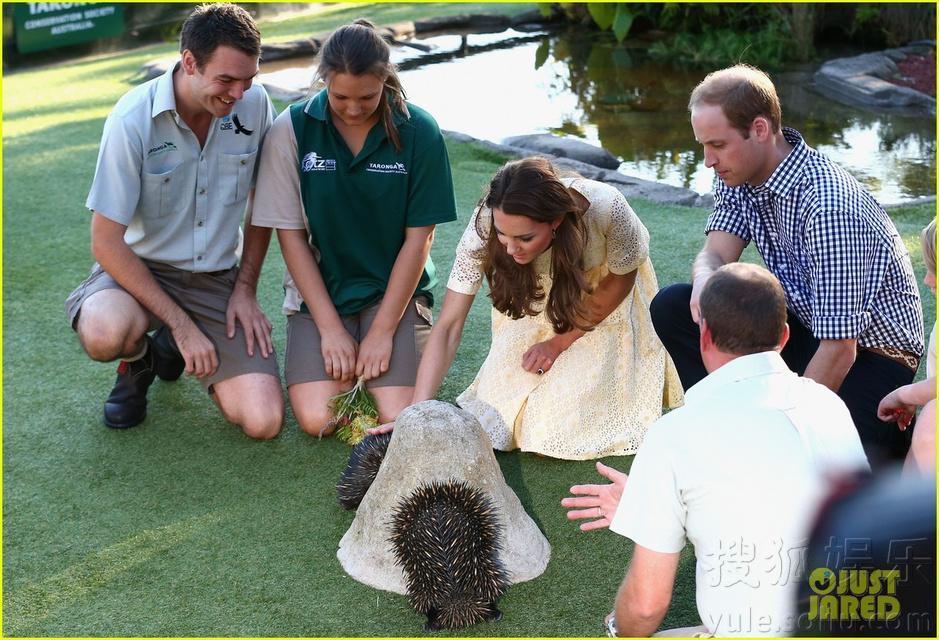 明星  责编:爱笑                 威廉王子凯特王妃抱小王子参观动物