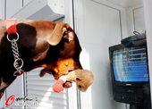 2012年8月10日,2012年伦敦奥运会第13日花絮,英国运动员展示奖牌,都柏文犬也爱奥运。 更...