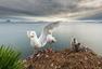 北京国际摄影周参展作品 罗伊-挪威野生动物