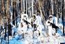 雪野丛林,边防官兵高寒天气长途奔袭练战法