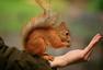 """""""肿了""""的小胖子 吃货松鼠们出动啦"""