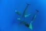 罕见!摄影师捕捉抹香鲸群竖立打盹画面