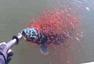 男子钓上一条大鱼 鱼宝宝缠绕救母让人感动