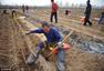 村民农闲帮人挖山药 一天挖900根挣200元
