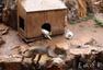 """动物园猴山现鼠患 工作人员请来""""猫保安"""""""