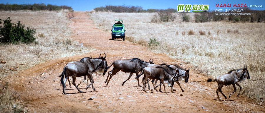 肯尼亚,圆一个动物世界的梦(图片)